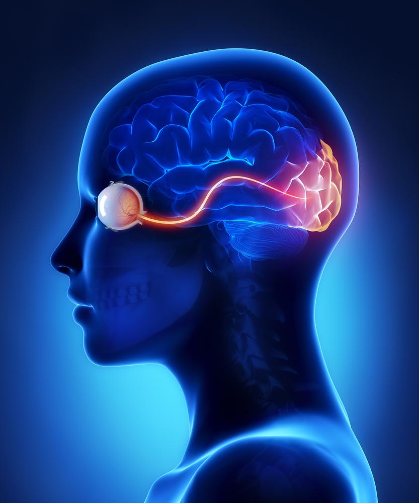 nervo ottico
