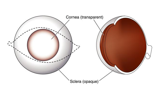 trapianto cornea